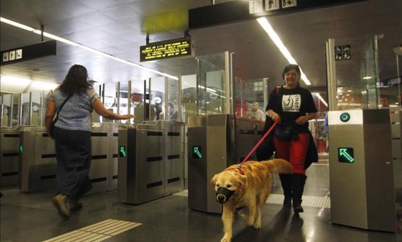 perros-podran-viajar-en-metro-madrid1