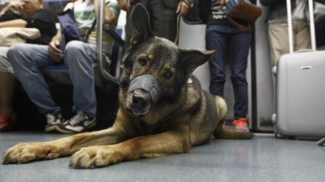 perros-podran-viajar-en-metro-madrid2