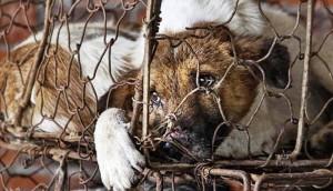 peticion-para-detener-exterminio-de-perros-en-alora - copia