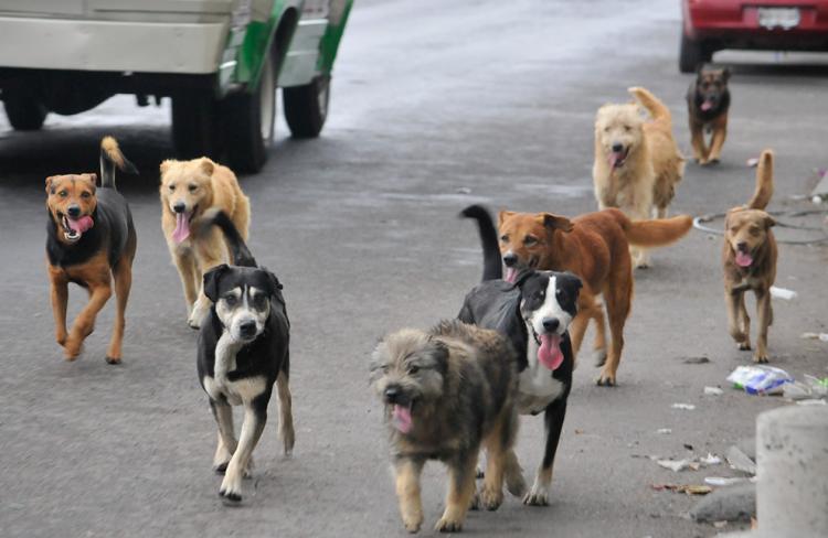 peticion-para-detener-exterminio-de-perros-en-alora2