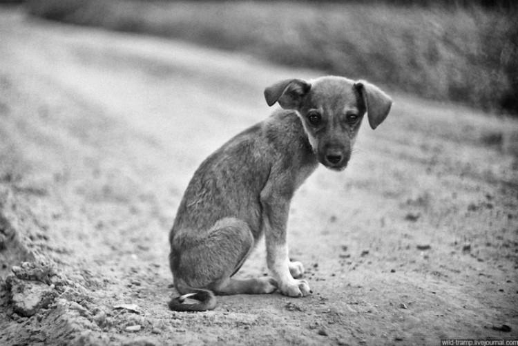 peticion-para-detener-exterminio-de-perros-en-alora3