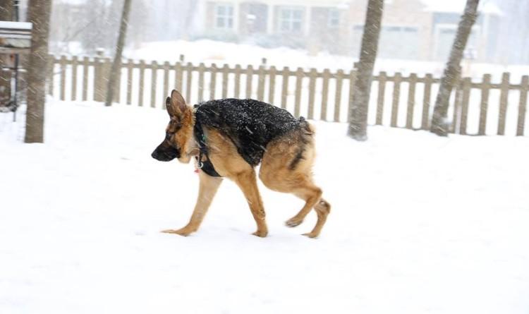 quasimodo-nieve