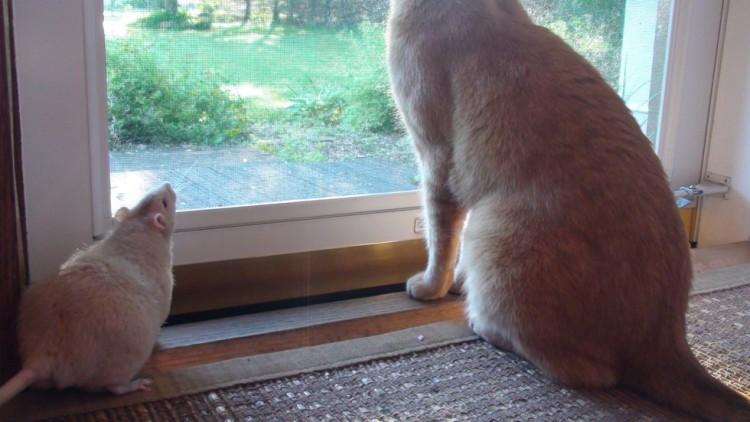 rata y gato amistad 1