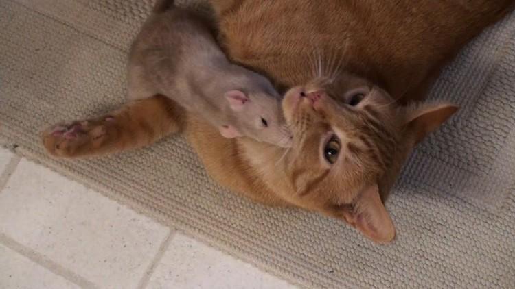 rata y gato amistad 2