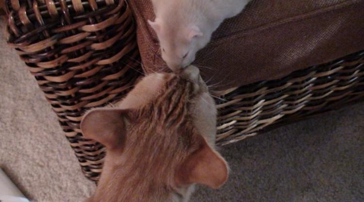 rata y gato amistad 4