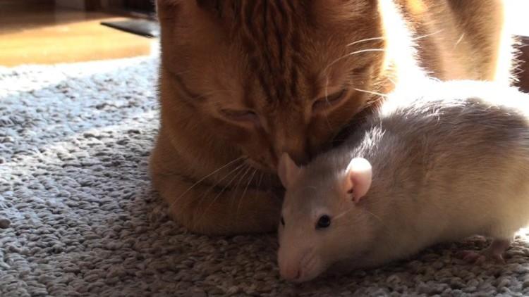rata y gato amistad 5