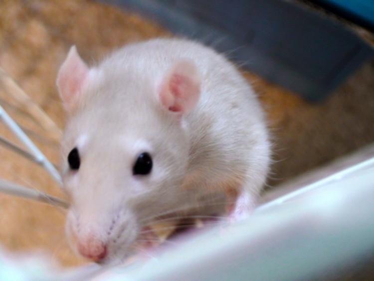 rata y gato amistad 7