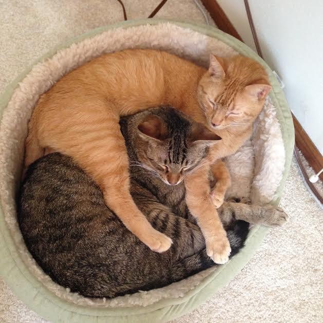 rata y gato amistad 8