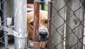 refugio-dispara-perros