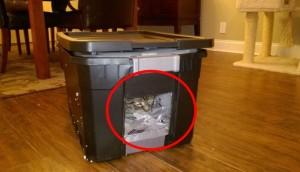refugio para gato 4