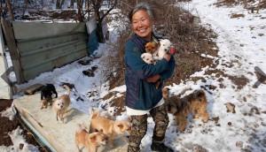 rescata-perros