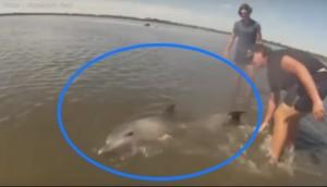 rescate bebe delfin 5
