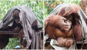 rescate-de-animales-rescatados2 - copia