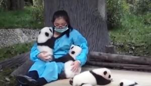 su-trabajo-es-abrazar-osos-panda3 - copia