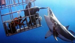 tiburon toca 1