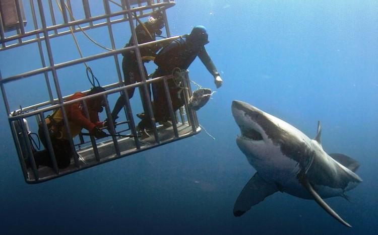 tiburon toca 2