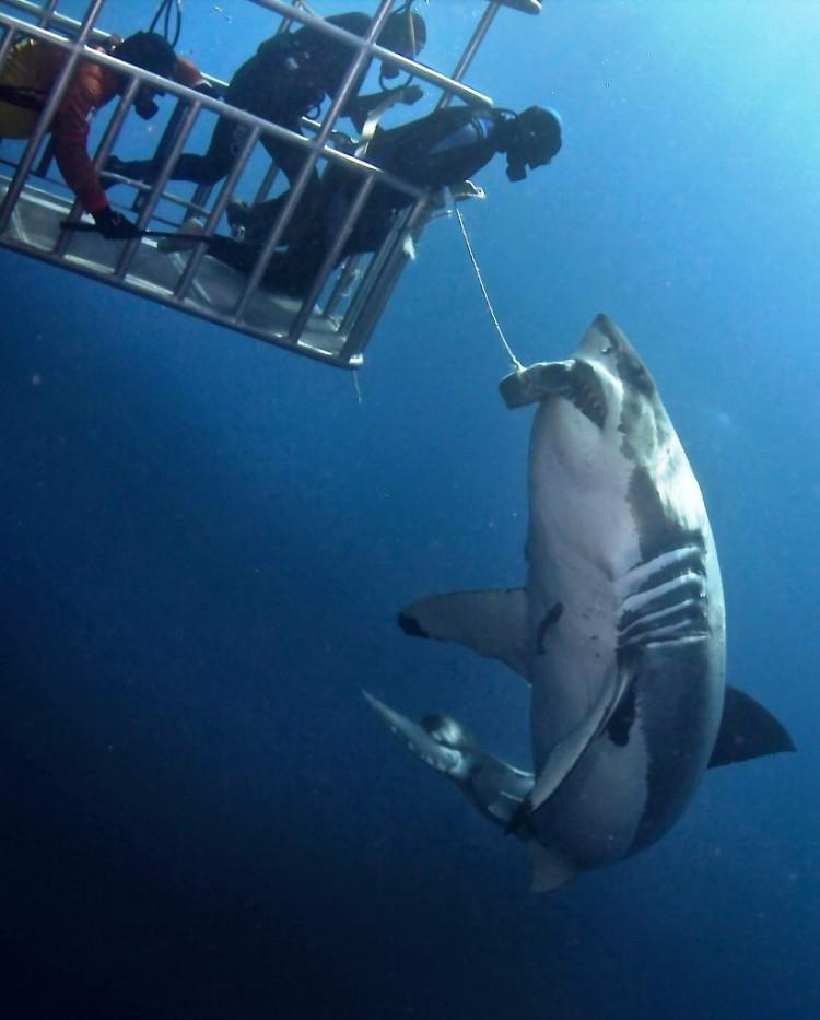 tiburon toca 3