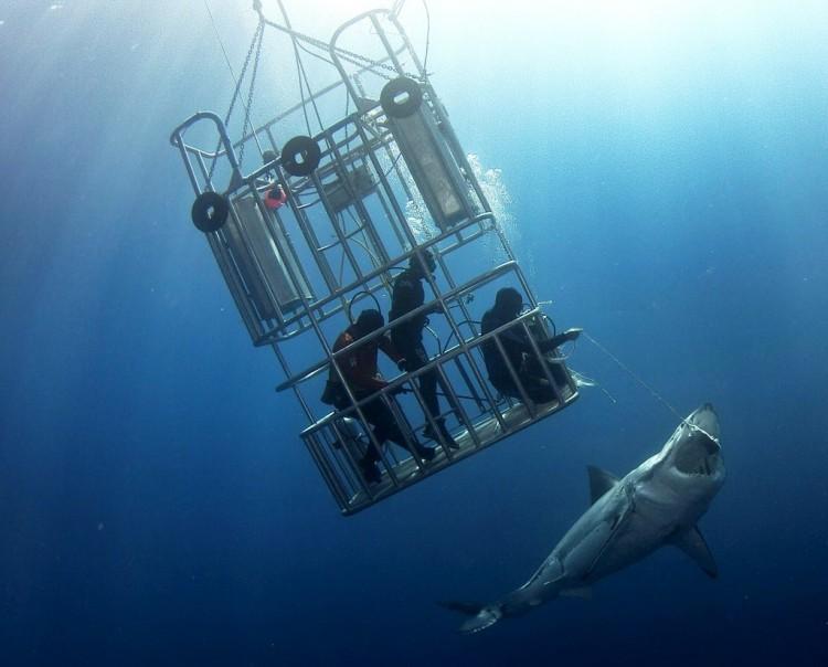 tiburon toca 4