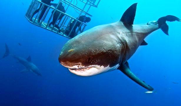 tiburon toca 6