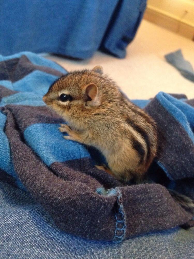 animal-bebe-tamia