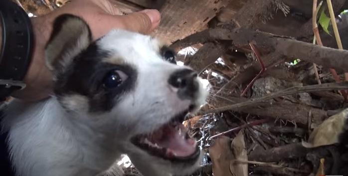 5 cachorritos huerfanos 11