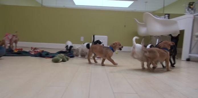 5 cachorritos huerfanos 13