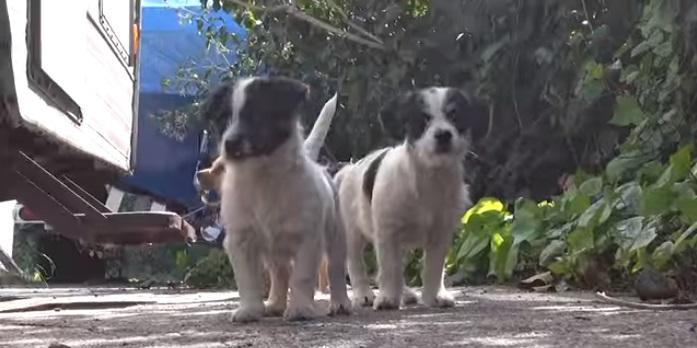 5 cachorritos huerfanos 2