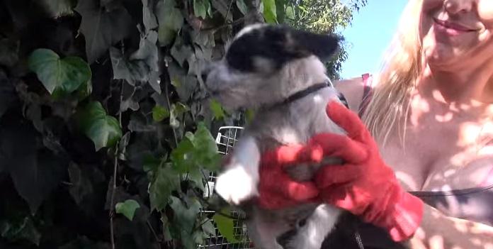 5 cachorritos huerfanos 6