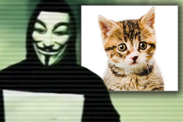 Anonymous-maltrato-animal