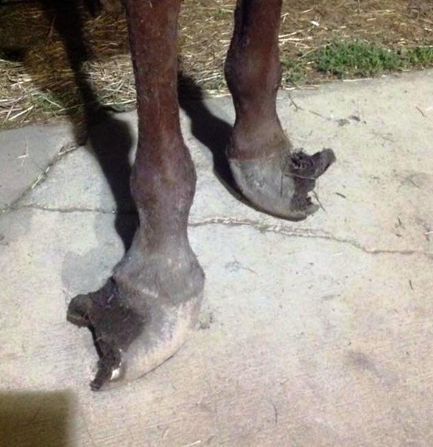 Caballo zapato 3