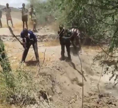 Elefante atrapado 9