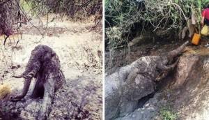 Elefante atrapado portada