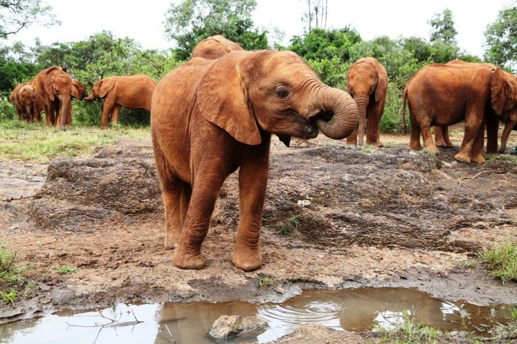 Elefantes perdieron todo 1