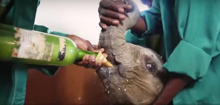Elefantes perdieron todo 10