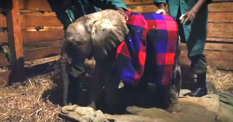 Elefantes perdieron todo 14