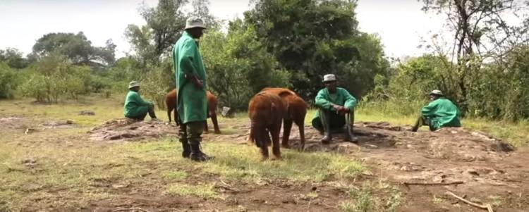 Elefantes perdieron todo 15