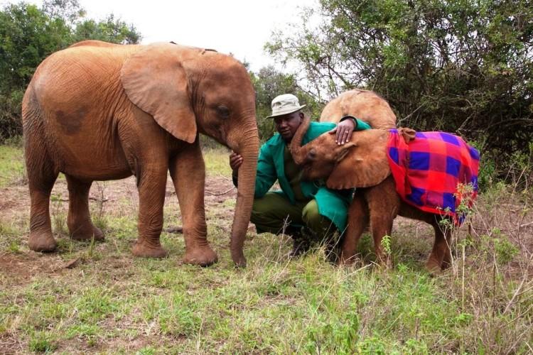 Elefantes perdieron todo 3