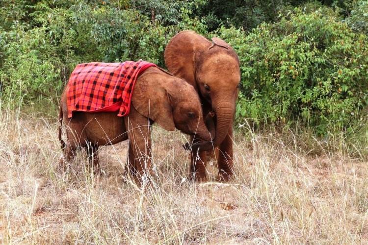 Elefantes perdieron todo 4