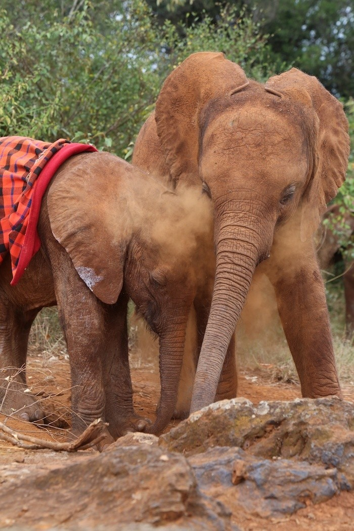 Elefantes perdieron todo 5