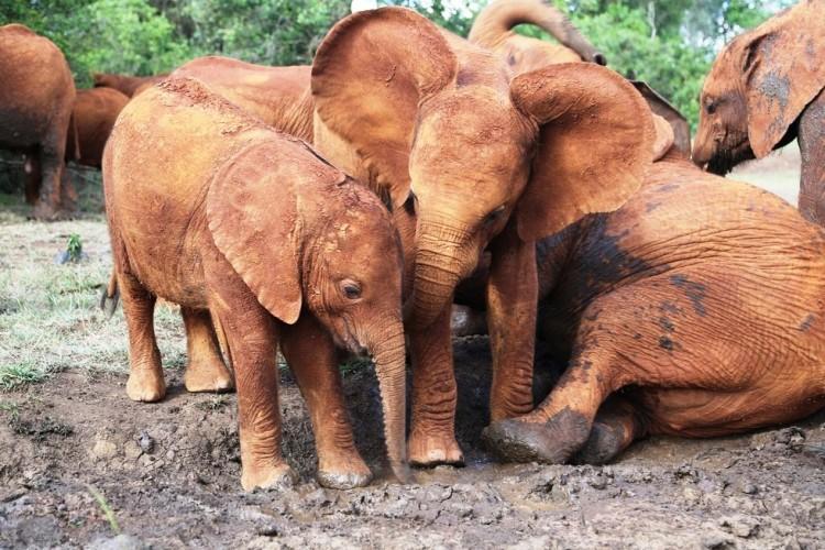 Elefantes perdieron todo 6