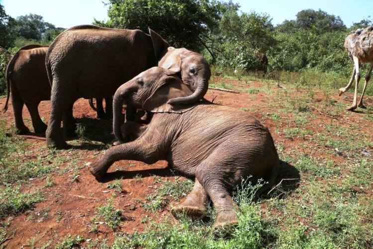 Elefantes perdieron todo 8