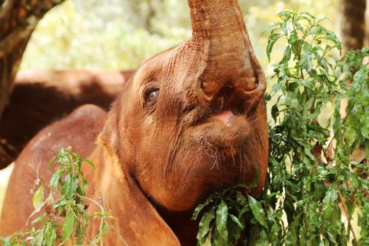 Elefantes perdieron todo 9