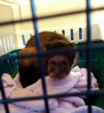Mono abandonado pequeño 1
