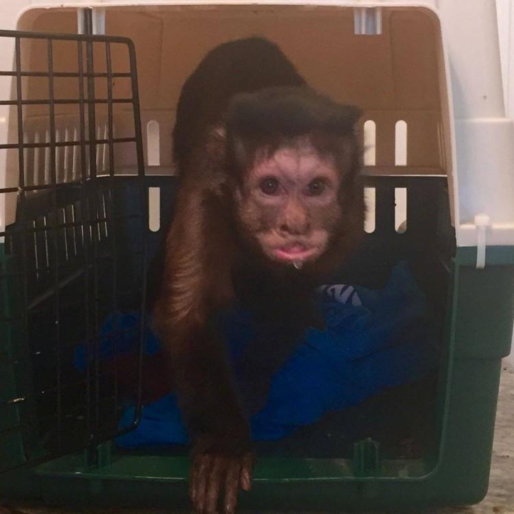 Mono abandonado pequeño 17