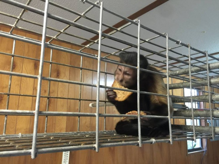 Mono abandonado pequeño 19
