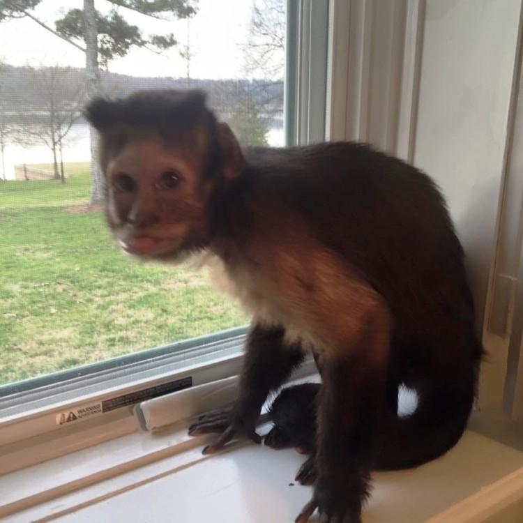 Mono abandonado pequeño 2