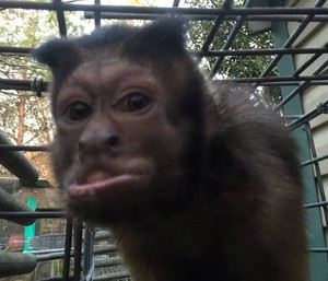Mono abandonado pequeño 4