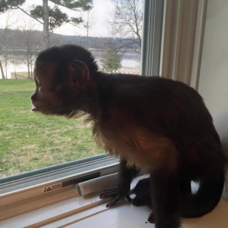 Mono abandonado pequeño 9