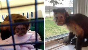 Mono abandonado pequeño portada