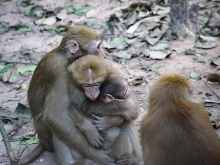 Mono y mujer 7